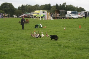 Slaley Country Show