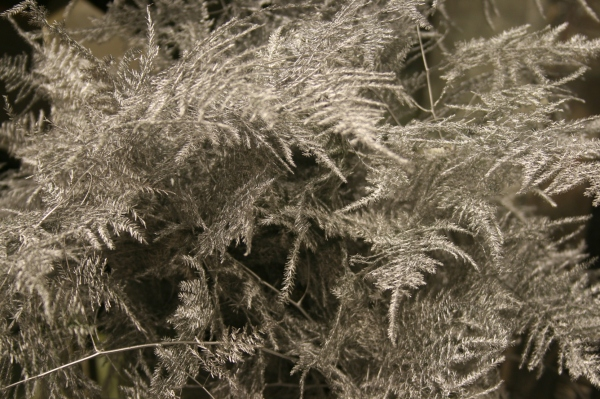 Winter Wonderland at Didsbury Flower Lounge