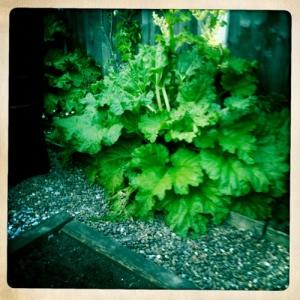 Thyme Out Deli Garden